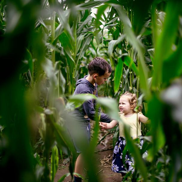 Elora Rain Maize Maze 1F9B4949 edit 2.jp