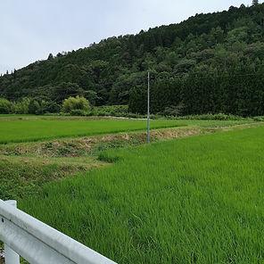Asahi%20farm%201_edited.jpg
