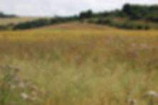 HLS field photo.jpg