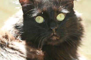 Reiki Heals Cats