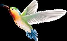 bird-5643642_960_720.png