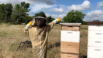 Bee Hive 2.jpg