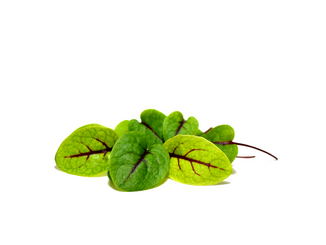 BABY LEAF RED VEINED SORREL