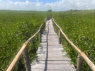 Mangrove path.jpg