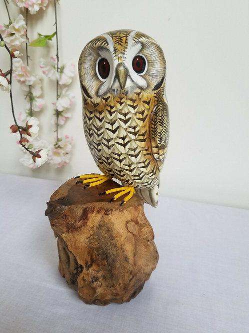 Owl On Tree Trunk