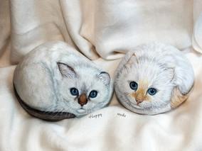 Deux chatons birmans