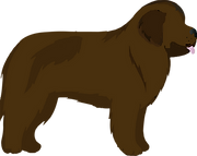 clipart brown newf.png