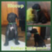green male 4 wks.jpg