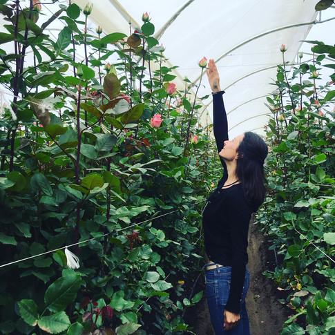 Ecuador - Flower plantation