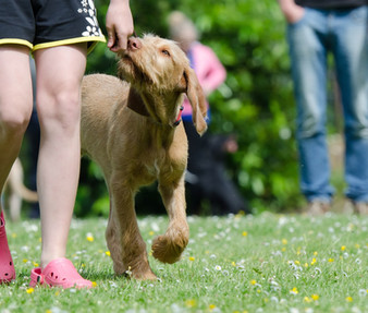 Hundeerziehung damals und heute (Teil 1)