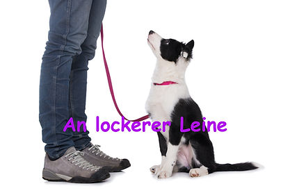 an lockerer Leine.jpg