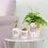 Thumbnail: Keep growing - metallic monochrome mini planter