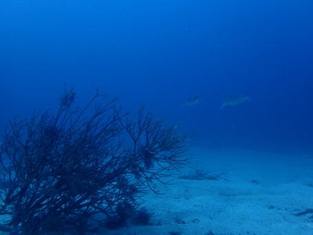 穏やかで透き通った海でした!