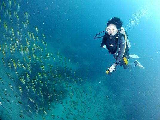 魚の群れとダイバー.jpg