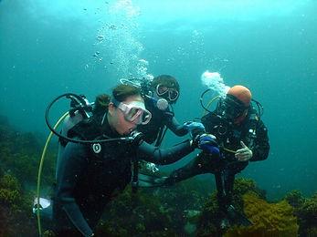 海中での体験ダイビングの様子