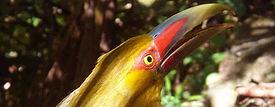 PETAR - Planeta Trilha - fauna