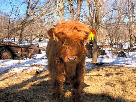 Tour Our Farm This Spring!