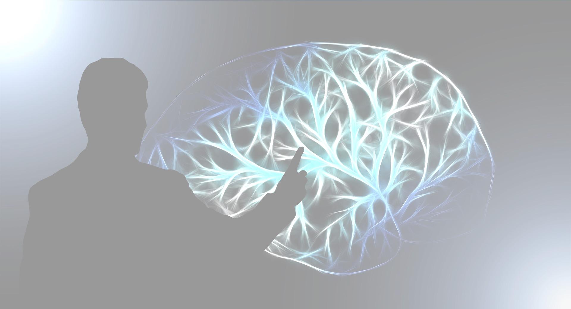 brain-3141247_1920_edited