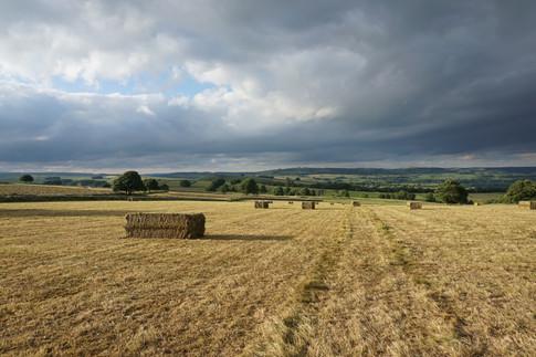 Hay making last summer