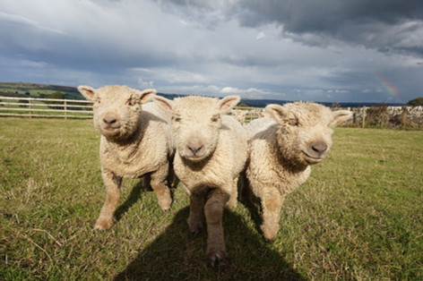 Our charming Southdown girls
