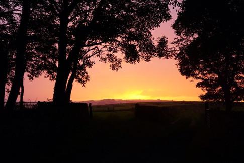 Stunning sunset across our fields