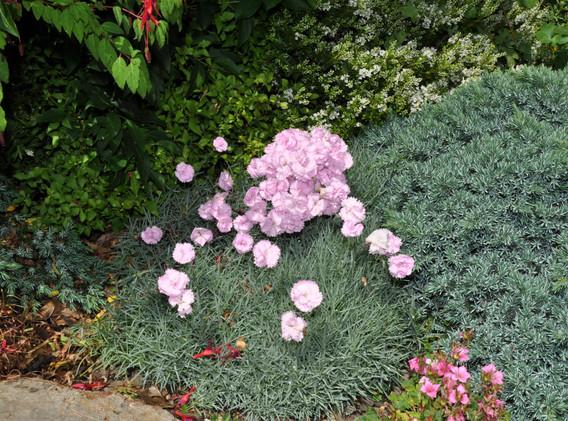garden_competition_2015_81_20170305_1373