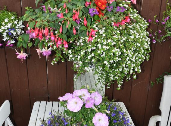 garden_competition_2016_82_20170306_1955