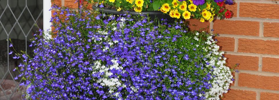 garden_competition_2016_96_20170306_1141