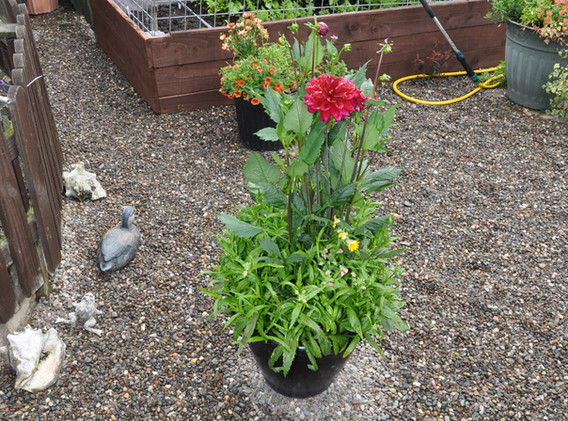 garden_competition_2015_100_20170304_152