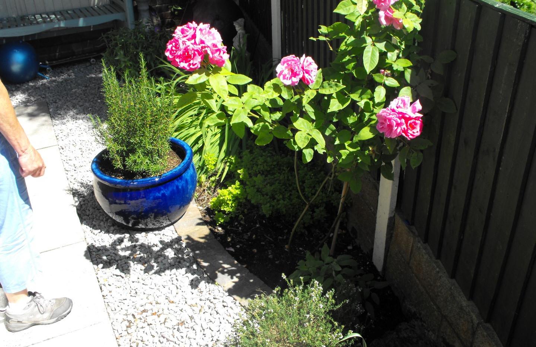garden_competition_2014_139_20170303_152