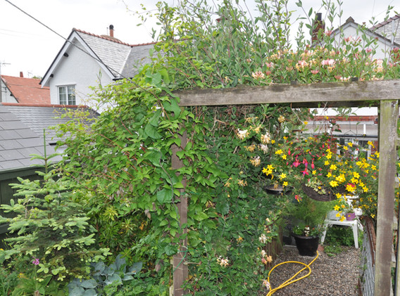 garden_competition_2015_96_20170304_1773
