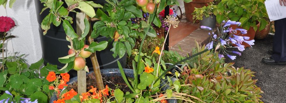 garden_competition_2016_88_20170306_1849