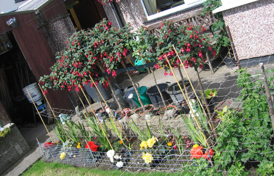 garden_competition_2009_22_20170303_2026