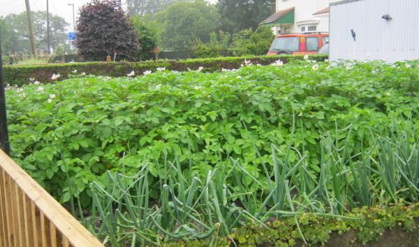 garden_competition_2012_26_20170303_1104