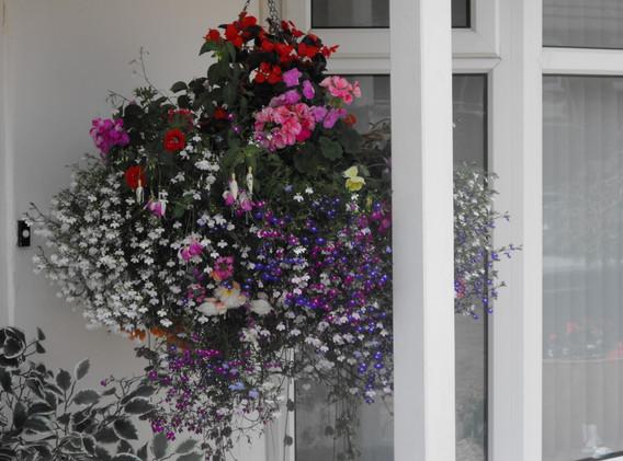 garden_competition_2014_151_20170303_129