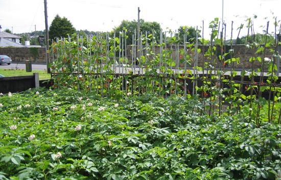 garden_competition_2009_23_20170303_1460