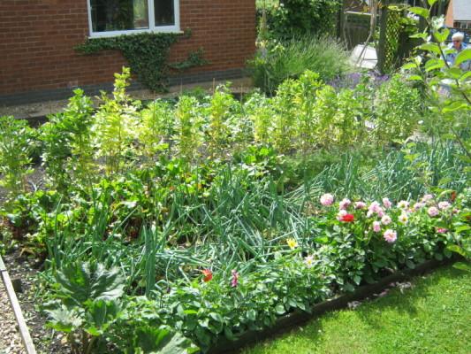 garden_competition_2010_54_20170303_1994