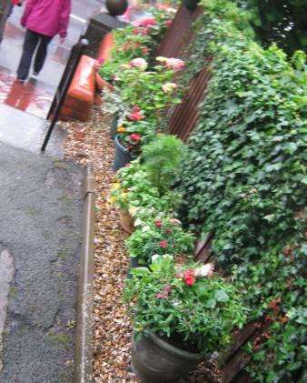 garden_competition_2012_52_20170303_1564