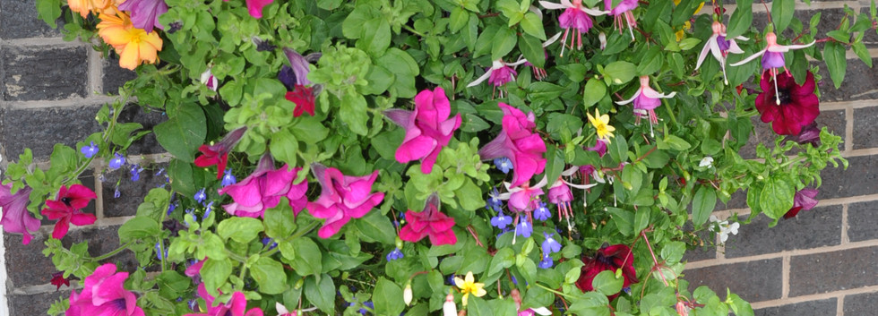 garden_competition_2016_83_20170306_1604