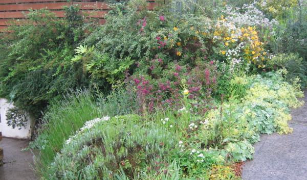 garden_competition_2012_61_20170303_1874