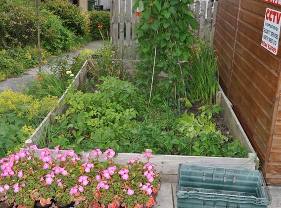 garden_competition_2016_84_20170306_1058