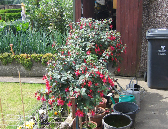 garden_competition_2009_24_20170303_1211