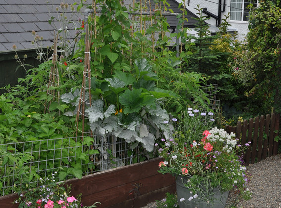 garden_competition_2016_83_20170306_1827