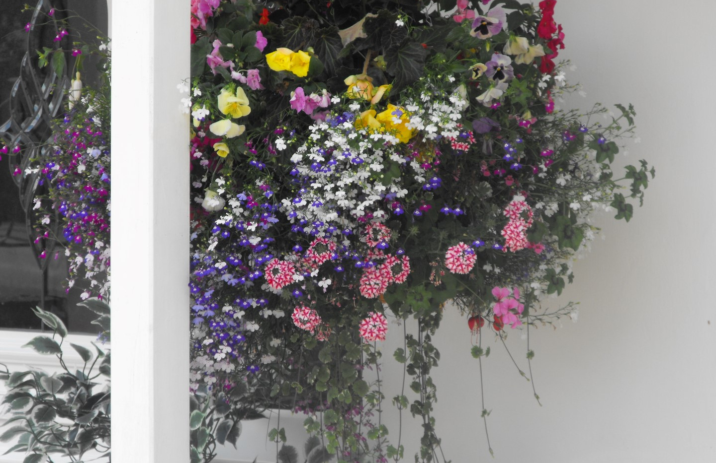 garden_competition_2014_150_20170303_163