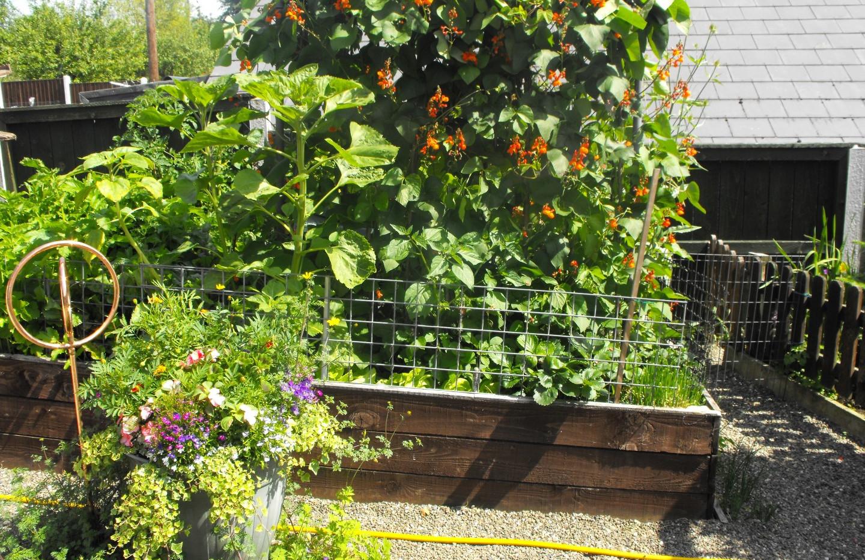 garden_competition_2014_104_20170303_172