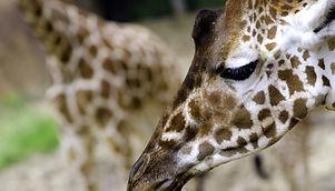 Land Park Zoo