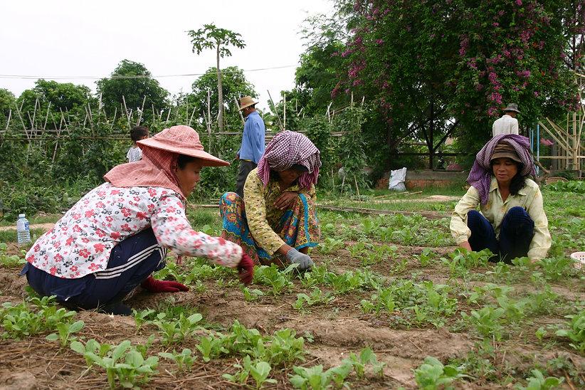 gardener 4.JPG