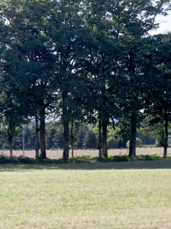 Une haie d'arbres, Limousin