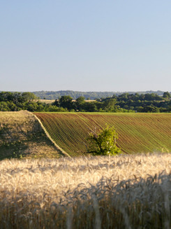Ondulation de terrain, Limousin