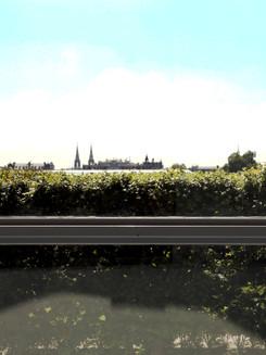 Paris, une haie vue de la fenêtre
